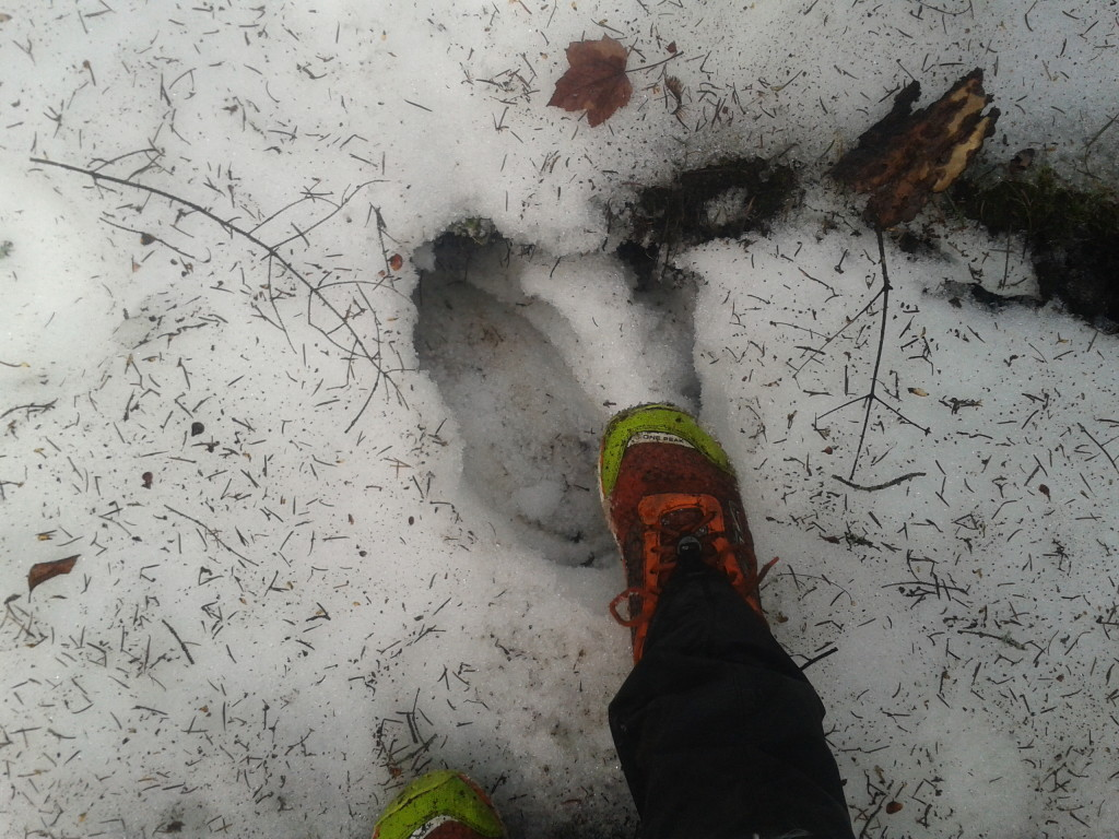 MLD Event gaiters and trail runner combo for postholing